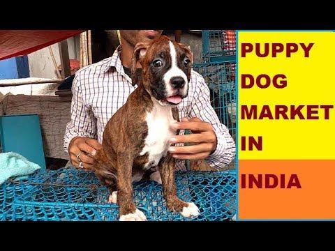 PUPPY DOG MARKET IN INDIA PART # 1