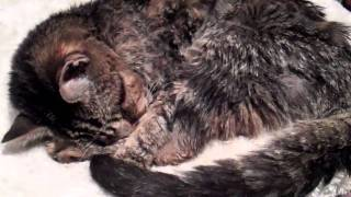 Waking a Deaf Cat Part 2  WAKE UP !!!