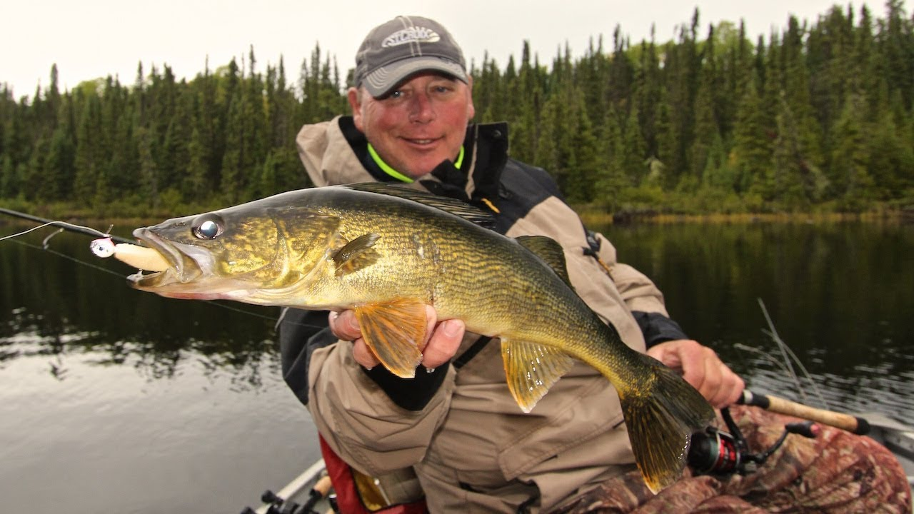 Canada Walleye Fishing - As Easy As It Gets! - YouTube Walleye Pictures