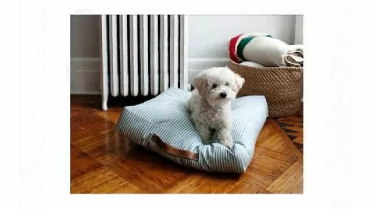 Объявления о продаже собак и щенков породы лабрадор в минске и беларуси.