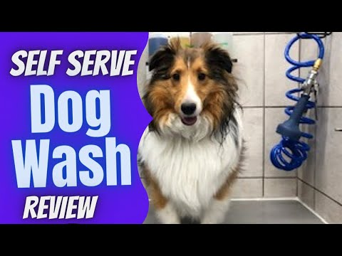 Self Service Dog Wash: Furry Murray Hits Up Pet Supplies Plus For A DIY Bath & Dog Treats REVIEW