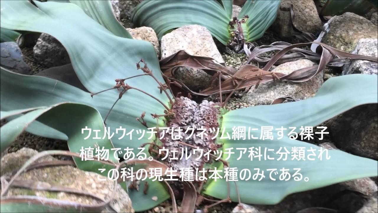奇想天外 【サントん暮らし 日本...