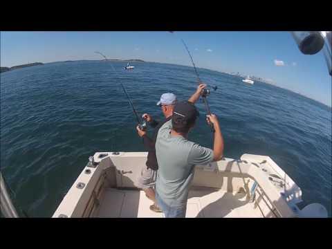 Fishbucket striped bass action Boston Harbor 9 2 2016