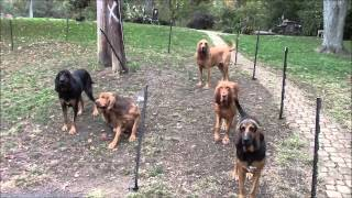 Bloodhounds are Always Guilty!