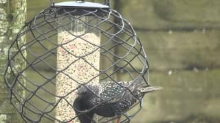 Starling-proof Bird Feeder?