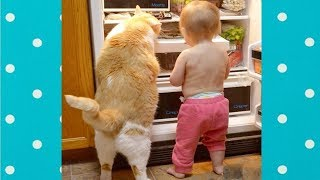 Funny Cats and Babies  Become Best Friend | Funny Pets