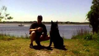 Dog Training- Spanish Commands Featuring Chief