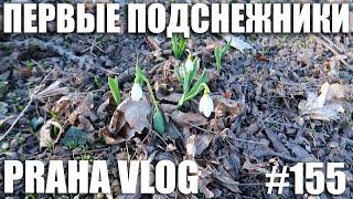 Прага, Первые подснежники, Петршин, Сад Кинских, Масопуст, Пришла весна - красотища! Praha Vlog 155