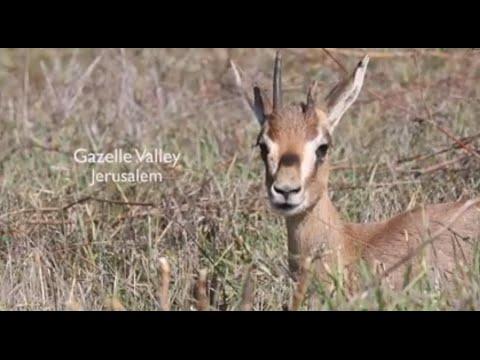 Gazelle Valley - Jerusalem's Urban Nature Reserve