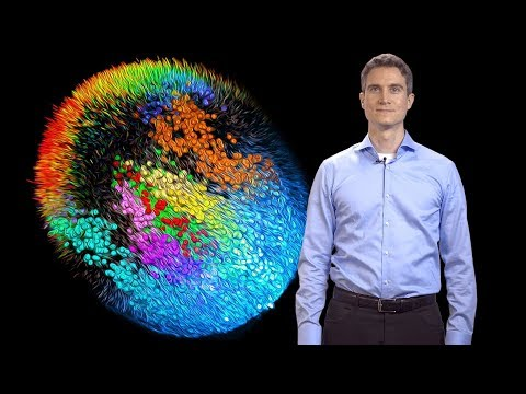 Single-Cell Imaging And Reconstructing Mouse Development - Philipp Keller (Janelia/HHMI)