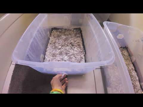 How To Soak a Monotub - MycoQuickie Ep  1 - YouTube