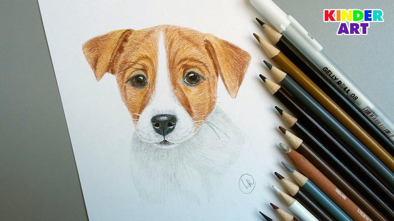 Собака - Джек Рассел терьер - Рисунок цветными карандашами