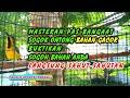 Langsung Nyahut Masteran Burung Sogok Ontong Bahan Gacor Sogon Apapun Lansung Respon Ampuh  Mp3 - Mp4 Download