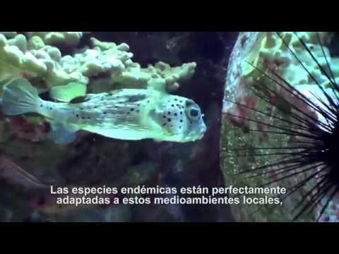 Documental: Isla de Pascua Producción, Economía y Fomento
