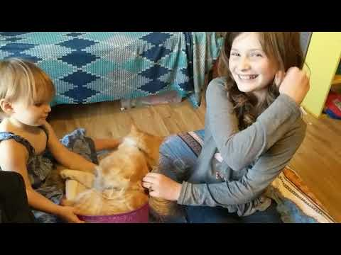 Do Maine Coon Cats make Good Pets for Kids?