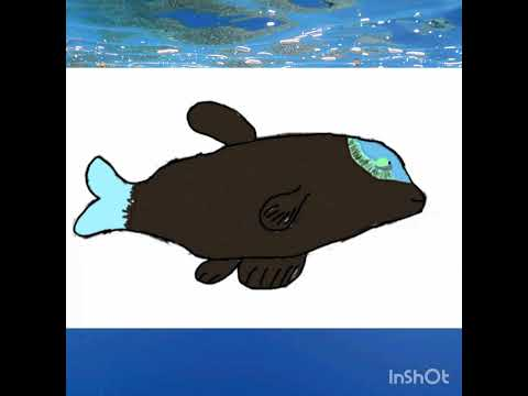 How To The Barreleye Fish