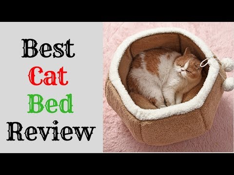 Best Cat Bed Review