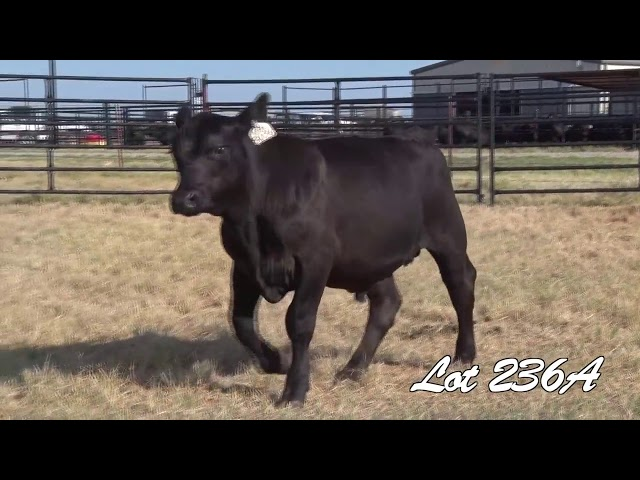 Pollard Farms Lot 236A