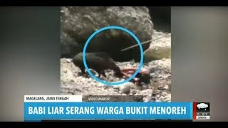 Viral Babi Hutan Serang Warga Bukit Menoreh | REDAKSI MALAM (13/08/19)