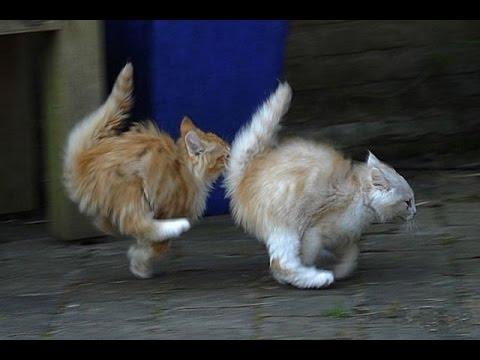 Смешные кошки смотреть видео прикол - 5:55