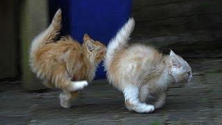 Супер кот Смешное видео про котов #3