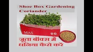 How to Grow Coriander in Shoe Box / Shoe Box Gardening / जूता बॉक्स में धनिया कैसे करें