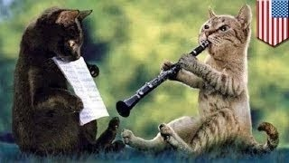 حيوانات موهوبة تلعب الآلات الموسيقية