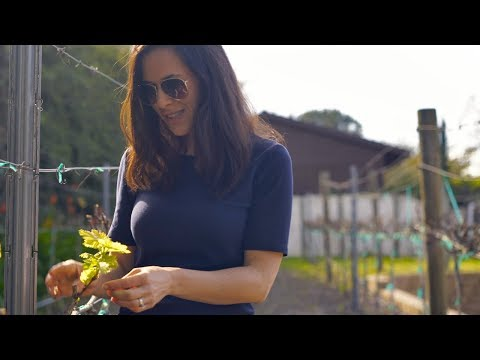 Grow Your Own Grapes — the Right Way