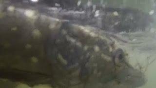 Рыбалка в Челябинске на щуку (полная версия)(Как ловили щук в Челябинске, напротив ЧГРЭС. Видео загружено для показа на туристическом портале Челябинск..., 2014-12-17T12:32:23.000Z)
