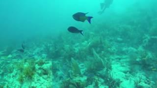 Rainbow Reef Dive #4 - Molasses Reef - Angela Lost!
