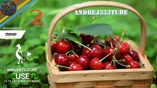 Innesto ciliegio papale (pt.2) - Giardinaggio, innesti e potature-Tecniche innesto alberi da frutto