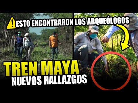 De última hora: miles de hallazgos arqueológicos en la ruta del Tren Maya | Noticias del Tren Maya