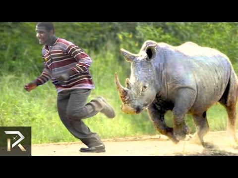 10 Crazy Animal Safari Incidents!