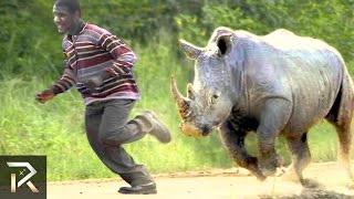 10 Crazy Animal Safari Incidents!
