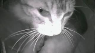 Онлайн трансляция - бездомные котята.