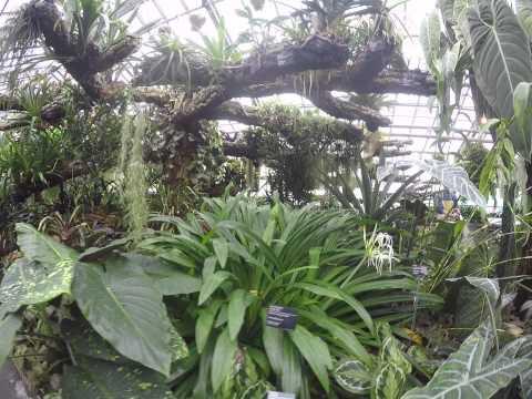 identification de plantes tropicales serres 3 youtube. Black Bedroom Furniture Sets. Home Design Ideas
