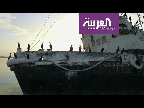 صباح العربية | طيور نادرة في سماء الكويت  - نشر قبل 2 ساعة
