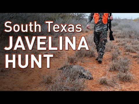 South Texas Javelina Hunting | Chaparral WMA Public Hunt