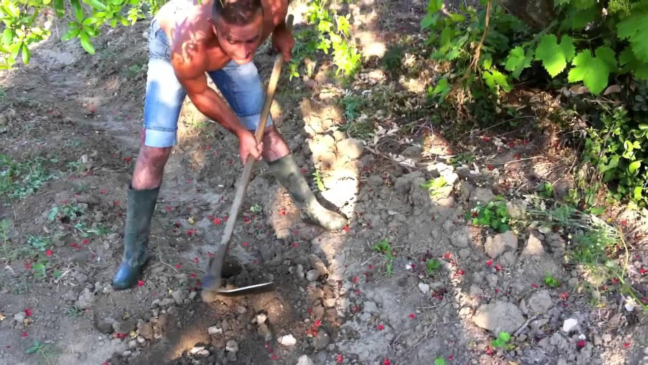 Irrigazione Tramite Solchi Scarano S Orto