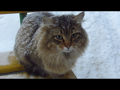 Cute cat with other cats under snowfall