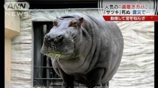 「歯磨き」で有名な東京・上野動物園のカバの「サツキ」が死にました。...