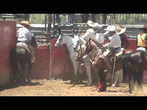 Resumen Coleadero con Banda La Herencia de Jerez. Sábado 9 de Junio 2012