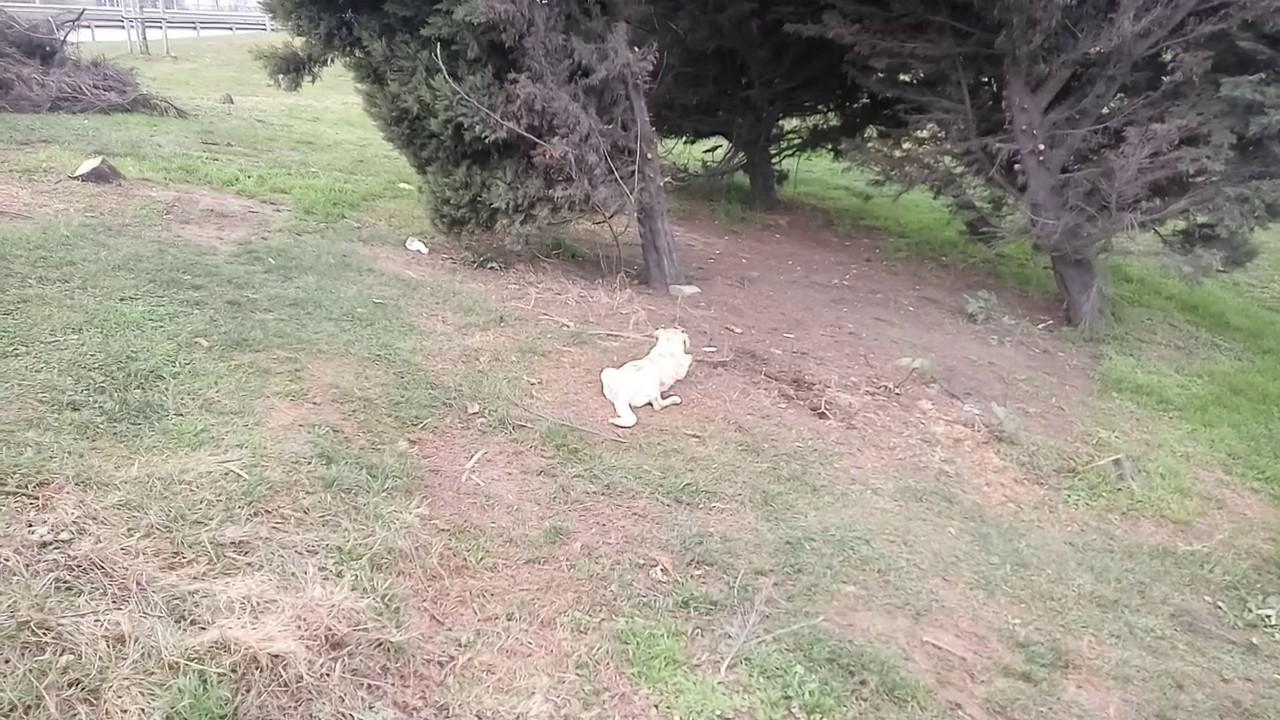 En şirin Yavru Köpek Videoları Derlemesi 2018 Derleme