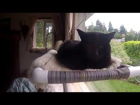 Cat Perch for Window Sills and Windows - Kitty Cot™ - World's BEST Cat Perch™ - KittyCot.com