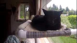 Cat Perch for Window Sills and Windows - Kitty Cot™ - World