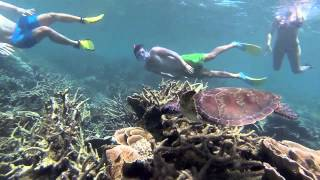 Coral Bay Snorkelling - GoPro HD