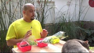 Plantando los nuevos Bonsai Zero (Pyracantha, lentisco, granado)