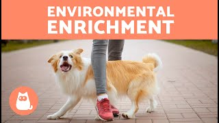 ENVIRONMENTAL ENRICHMENT for DOGS 🐶🐾 (Types and Accessories)
