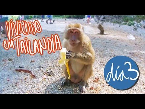 VIAJE A TAILANDIA BARATO! MONOS, ELEFANTES, EXCURSIONES