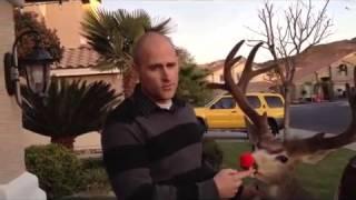 Eve Drop Christmas Lights Hanger | As Seen On Shark Tank